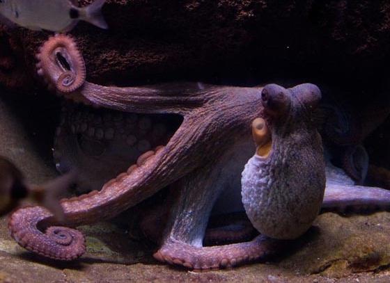 calamar-tinta