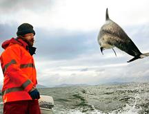 delfines-pescadores