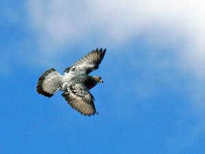 palomas-magnetismo