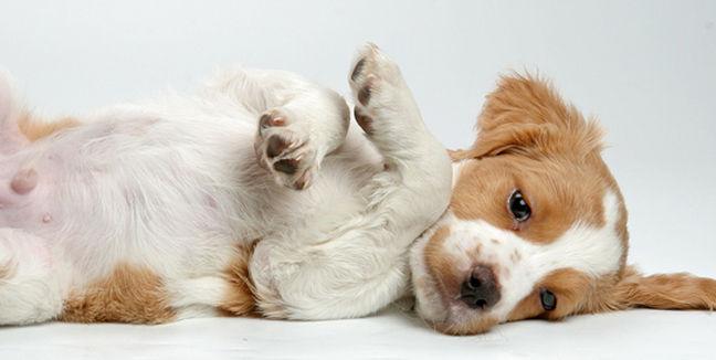 perro-monito