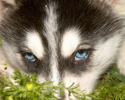 perro-temor