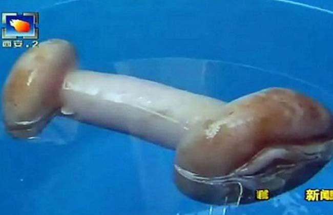 juguete-sexual-hongo