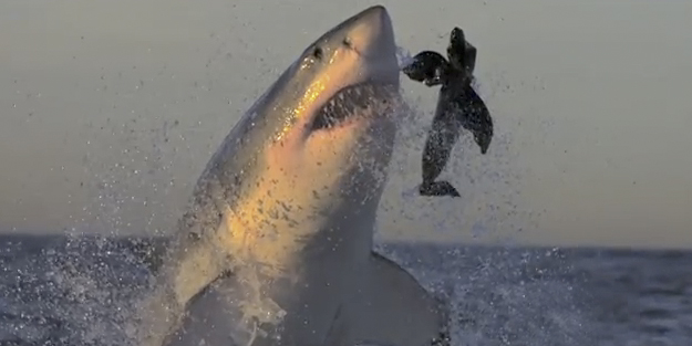 tiburones-blancos-camara-lenta