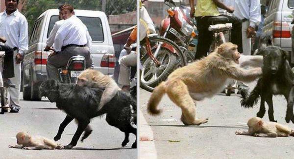 mona-ataca-perro
