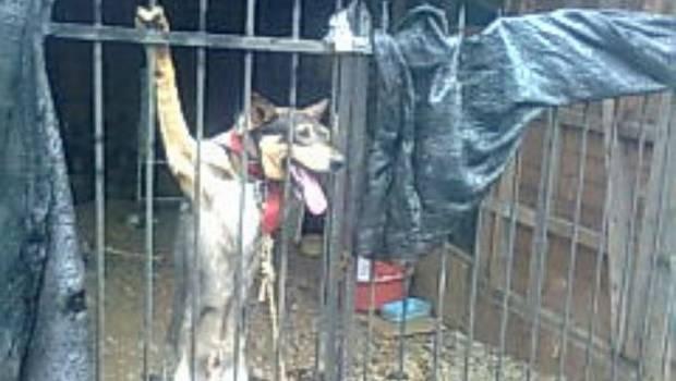 Video fuerte: Policía logra salvar a perro crucificado
