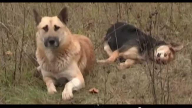 Video: perro cuida a su amiga atropellada y muerta mas de una semana