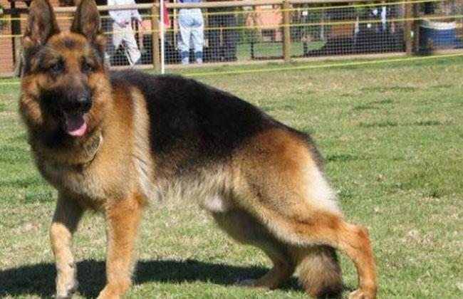 Abusó de su perra y pide que se la devuelvan porque la extraña