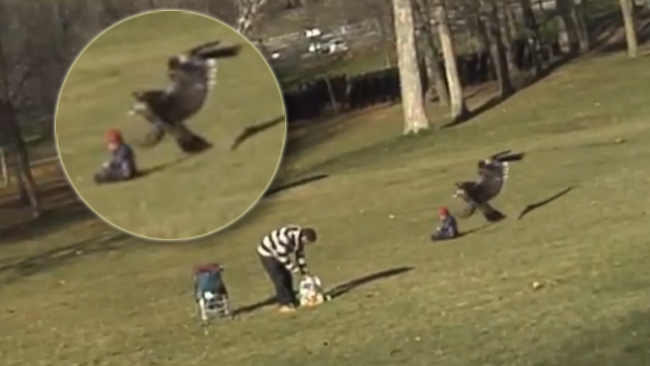 Video insólito: Águila caza a un bebé en un parque
