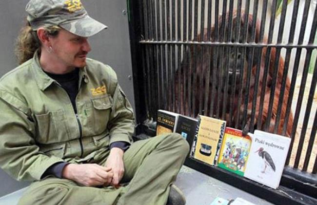 Cuidador hace dormir a monos leyéndole libros