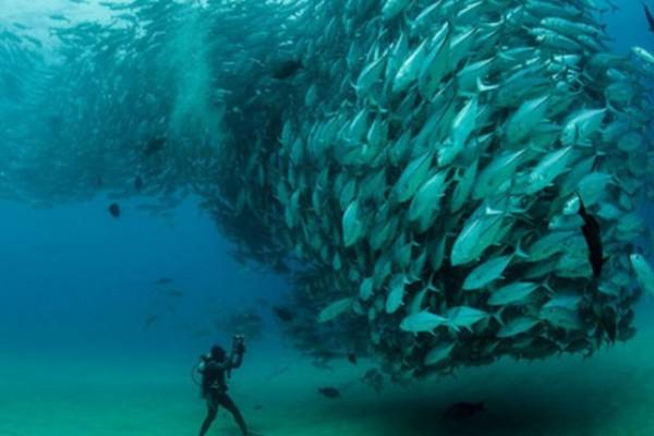 Video espectacular: Remolino de peces en el mar