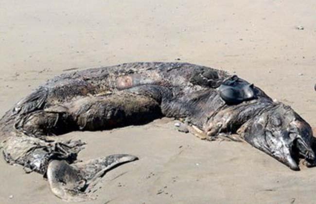 Terror en Chubut por aparición de extraño animal