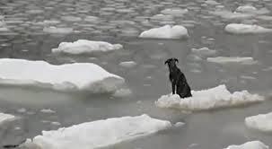 Video: rescatan a perro atrapado en el hielo